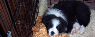 Shelby-puppy-header2