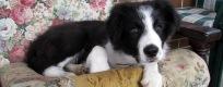 Shelby-puppy-header4