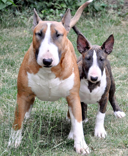 This is not Tex and Casey, but they did look a bit like these two.