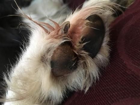 My sore paw again