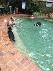swim2