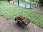 backyard10