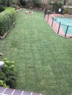backyard12